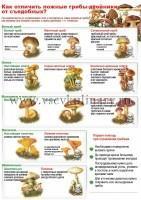 Внимательно осмотрите грибы, уберите старые или червивые