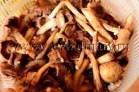 Хорошо промойте грибы проточной водой