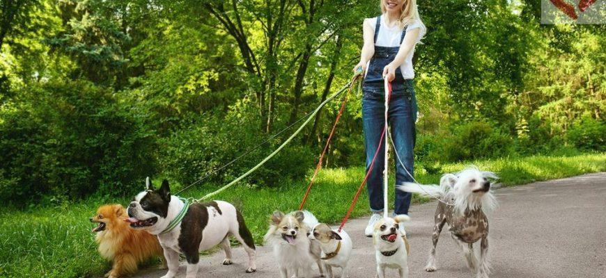 Неприхотливые собаки